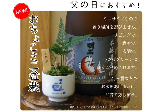 明石鯛おちょこミニ盆栽